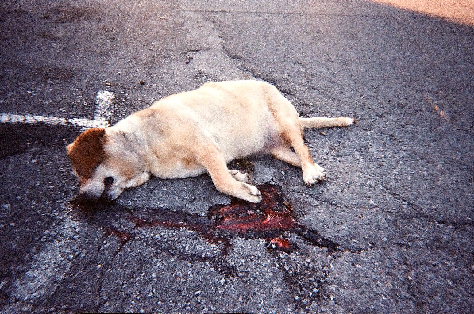 Pes sežral ostrý předmět